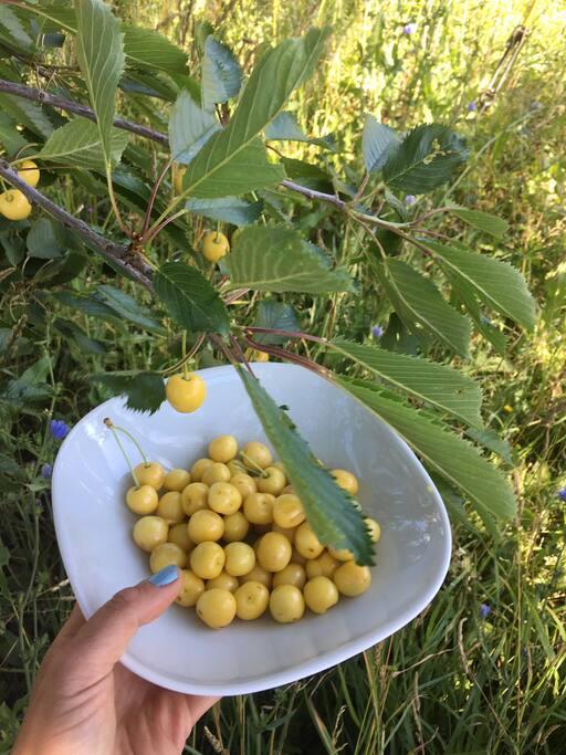Massor av fruktträd och bär.