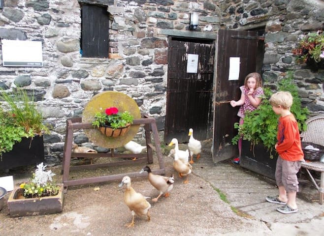 Letting out the ducks in the morning - guests who are young or young at heart are welcome to do this!