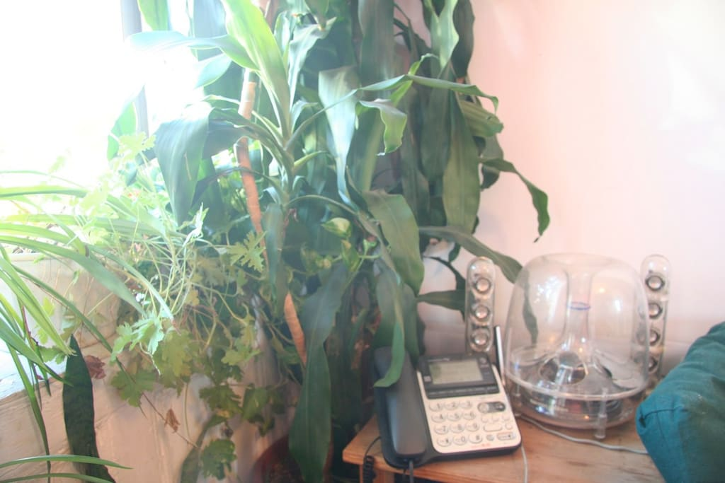 Green plants all around, free USA landline phone and internet included. Plug in your computer/mobile into lively speakers