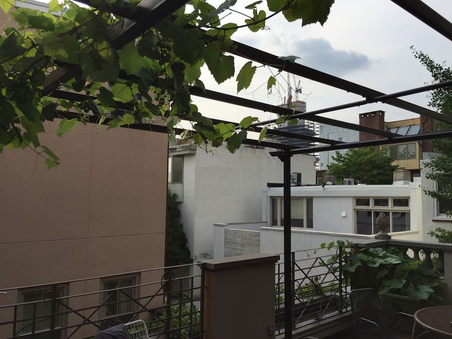 Grape arbor on deck overlooking Delancey St.