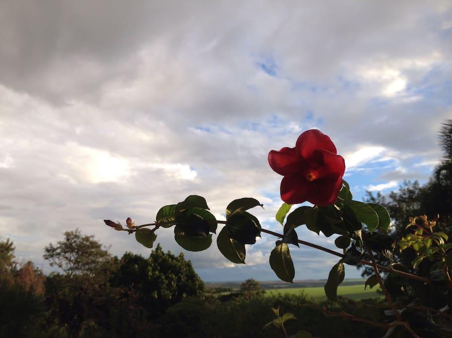 Panoramic views and abundant nature