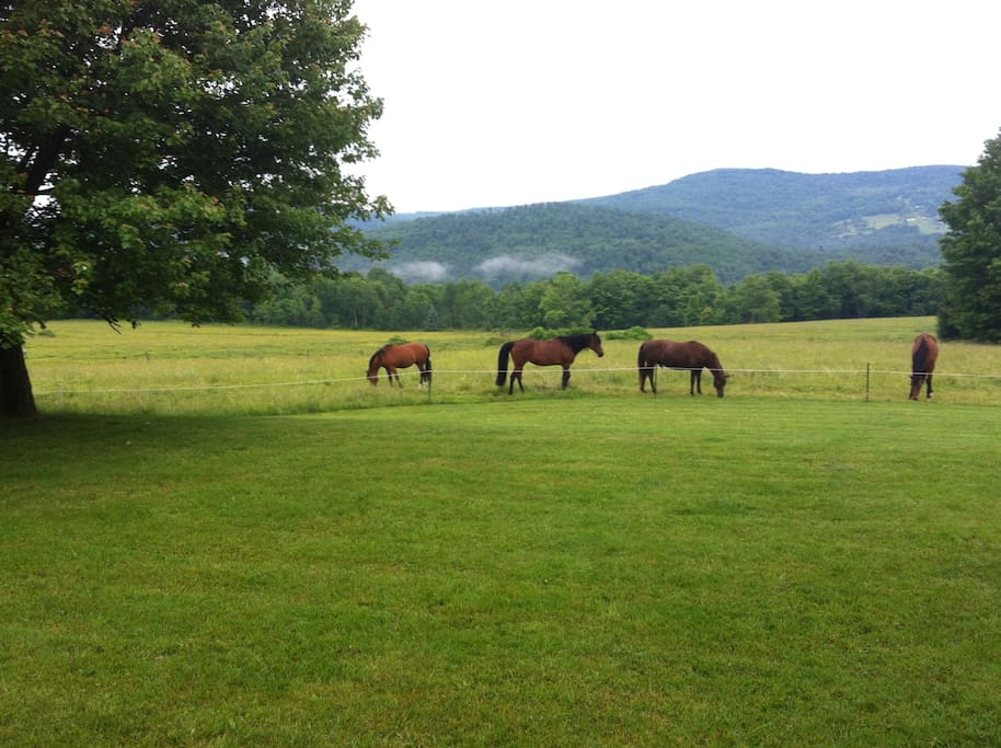 Enjoy the company of our 7 rescued horses.