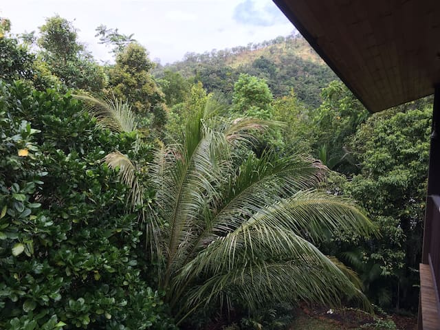 Spacious home in rainforest setting - Kamerunga - Casa