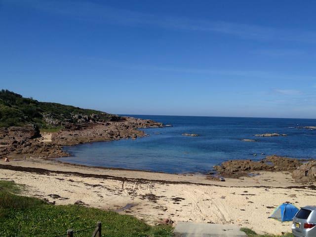 Ocean Retreat:Dolphins, Whales,Swim,Crashing Waves