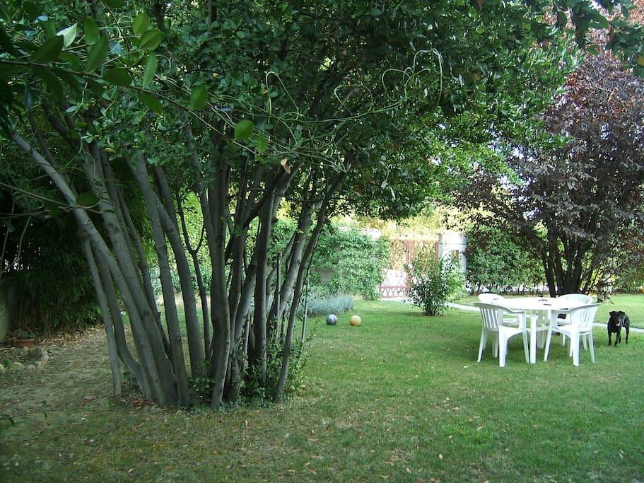 il giardino avanti