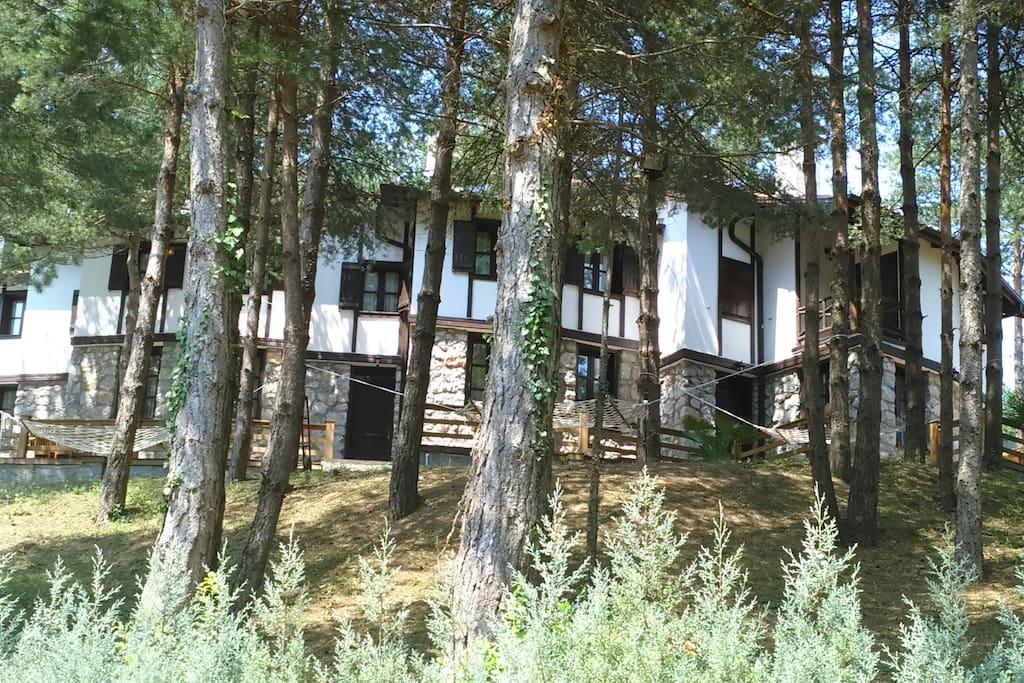 Villa become a secret garden by the pine trees