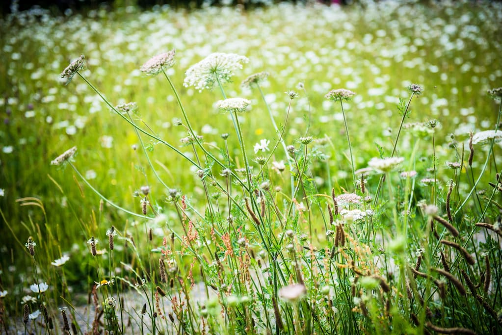 Wild grass and flowers at Roseberry Cottage B&B
