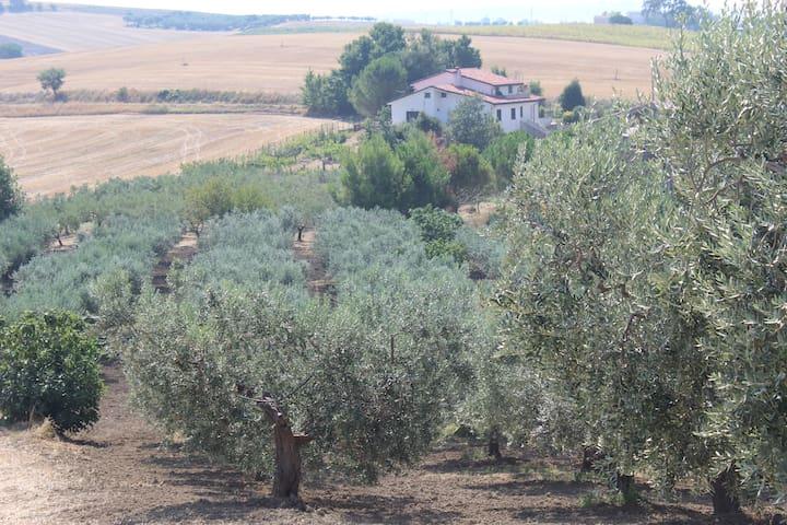 Maison de campagne proche de la mer - Montenero di Bisaccia - House