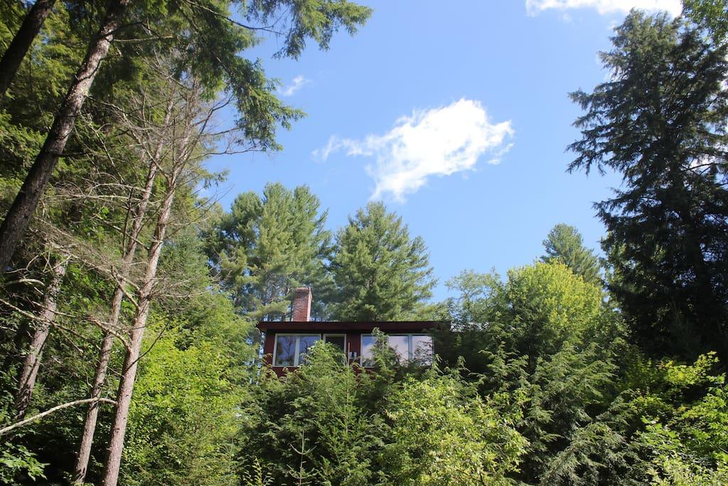 A house amongst the trees