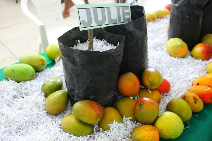 Grenada Mango Festival held at the National Stadium every July.
