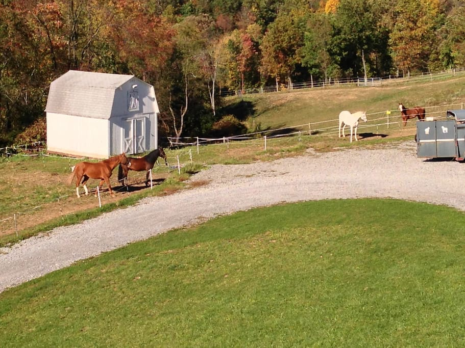 10 minutes from Cranberry and Pittsburgh, but the view outside your window of the ponies!.