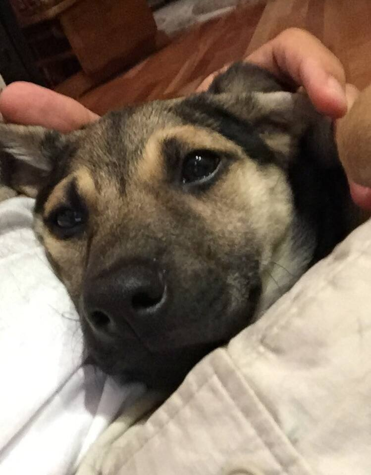 The newest member of the household… Sheila the Shepherd! She's an active, quiet puppy. Does not go in the guest room area. And she will love you.