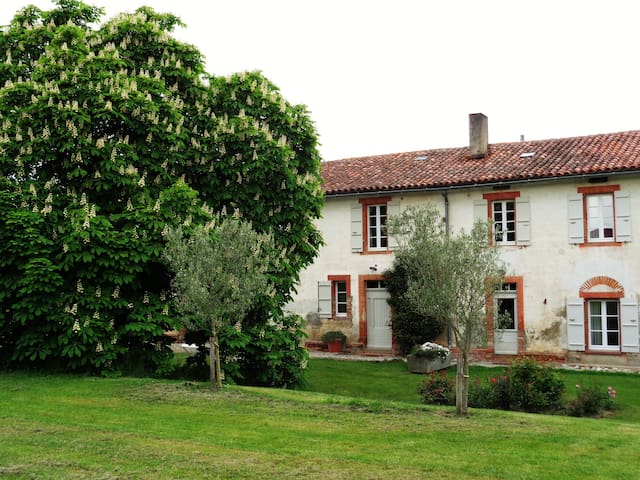 The big chestnut tree in front of the farm