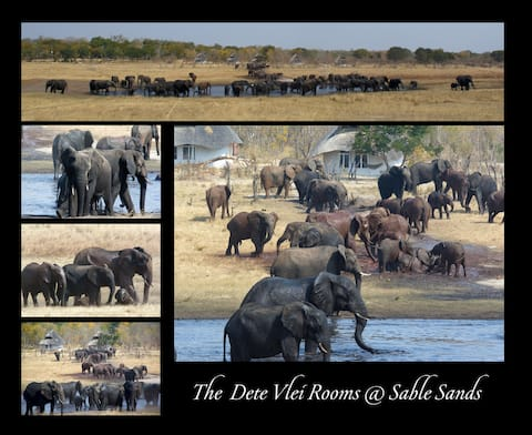 Sable Sands Safari Lodge