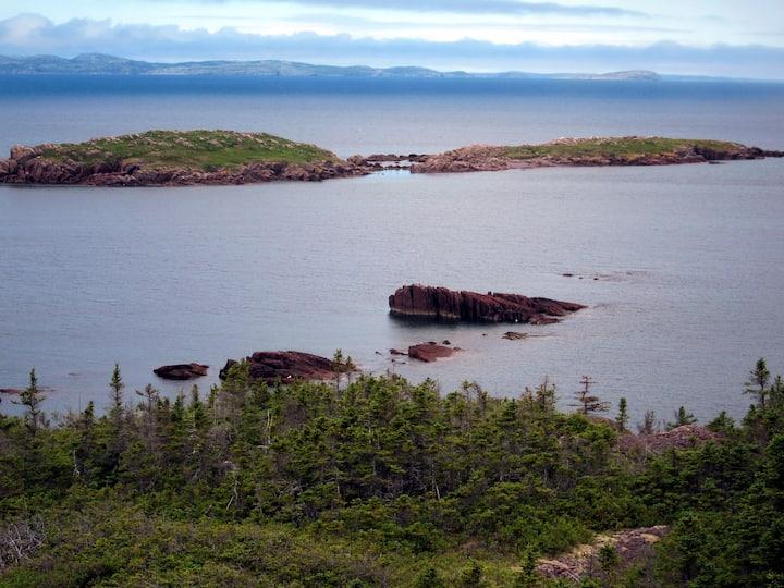 Newfoundland Paradise