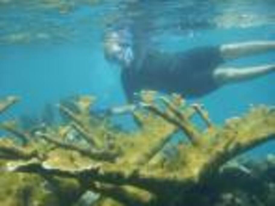 Debbie snorkeling by some elkhorn coral