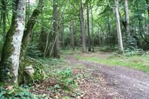Nära skogen
