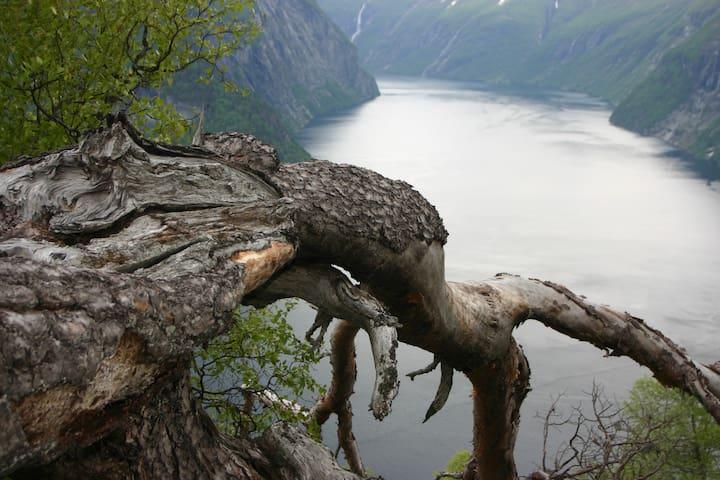 A dive into the Geiranger fjord!