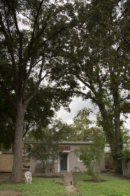 Town Lake Home embraced by beautiful pecan trees