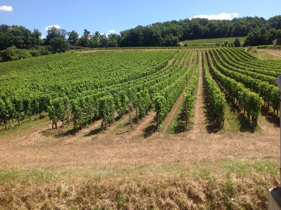 Chambre Feuille de Vigne - Vue directe sur les vignes