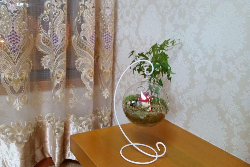 点缀爱屋的微型植物
