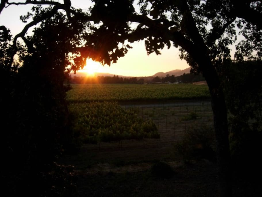 Gorgeous sunsets above our vineyard.