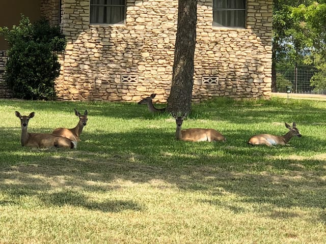 Deer lying in front yard