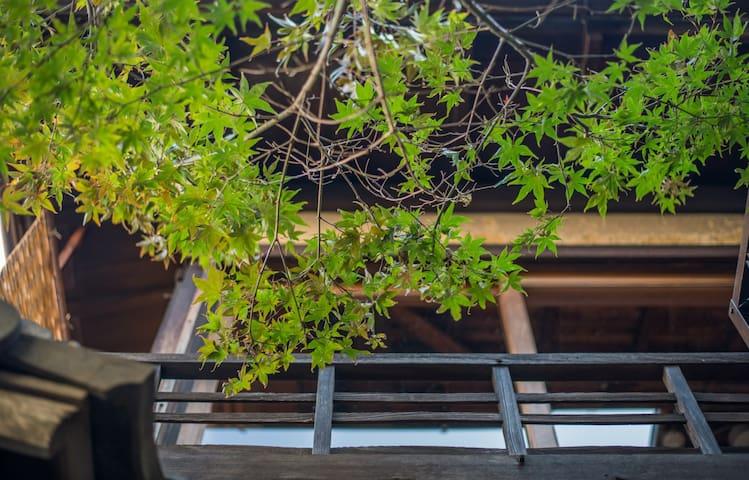 Kyotofish·Komatsu*Maple Garden*100Yr Machiya