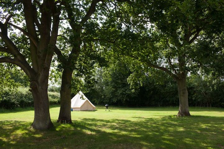 Gorsey Meadow Norfolk - Hockering - Tent