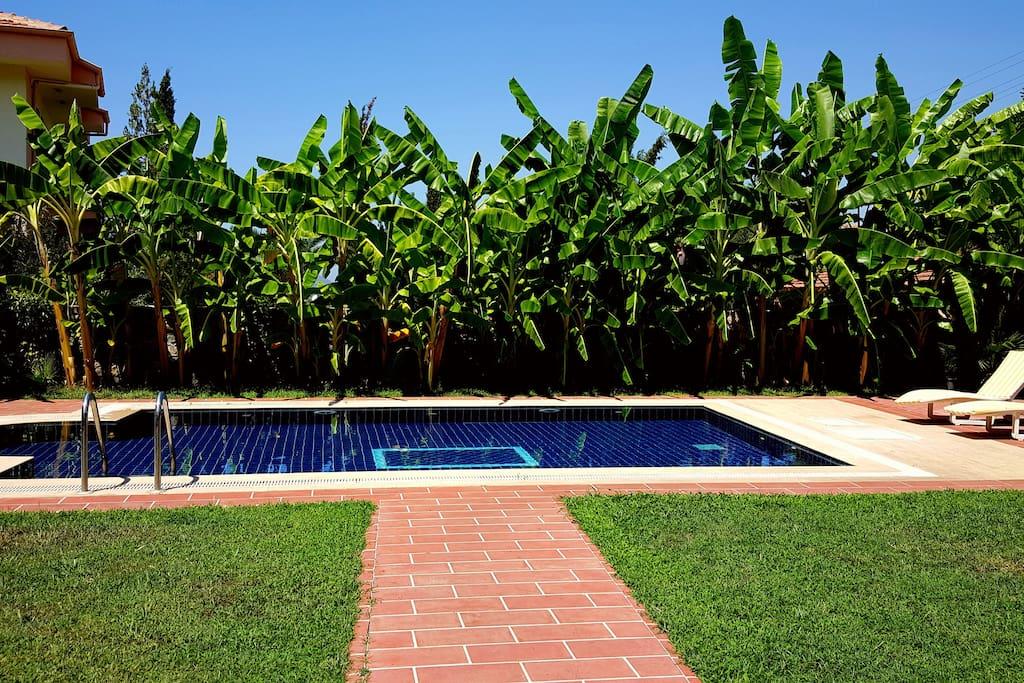 Muz ağaçları ile çevrili havuz görüntüsü