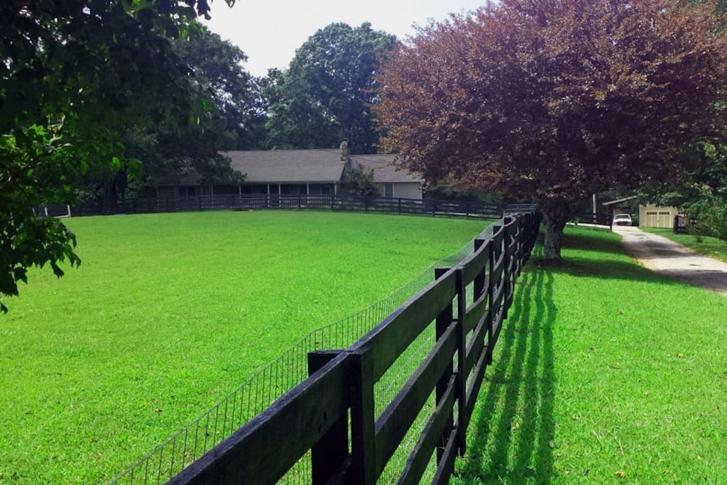 Front Pasture For Horses and Dogs. Wire Fence to keep dogs contained.