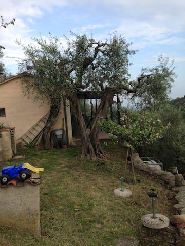 Negli Olivi della Toscana - Vicopisano - Sommerhus/hytte