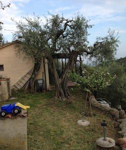 Negli Olivi della Toscana - Vicopisano