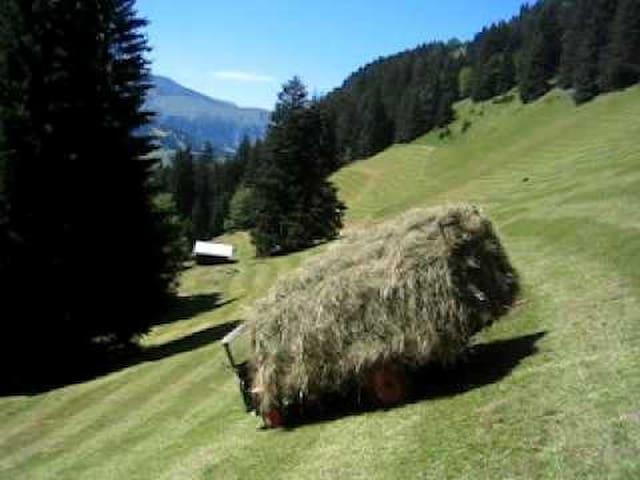 Alp Hürital - Sattel