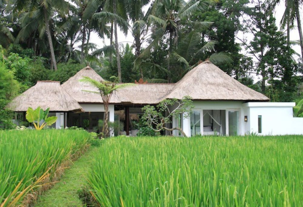 View of River Moon Villa nested in the trees from the rice fields