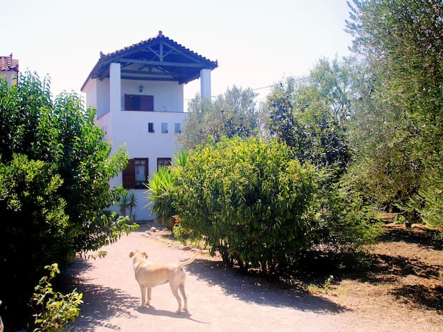 Villa Selana-inspired by Molyvos - Mithimna - House