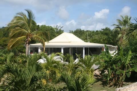Lodge antillais dans une palmeraie