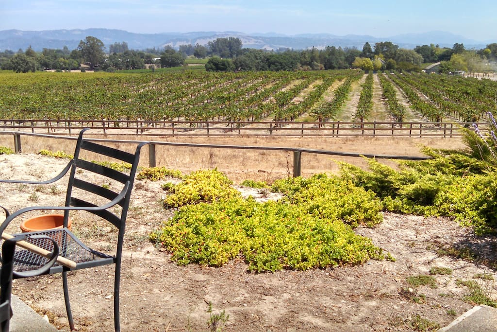 View of Chardonny vineyard in August of this year.