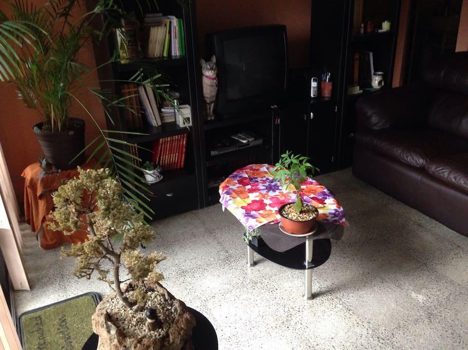 La estancia alado de la TV mía mi hermosa gata!!