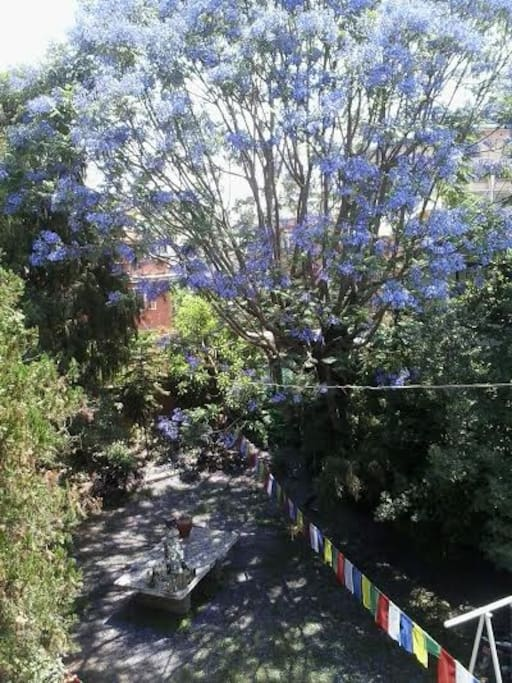 The view on the garden