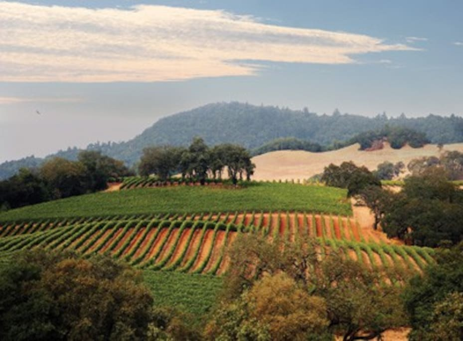 Local to the best Sonoma County Vineyards