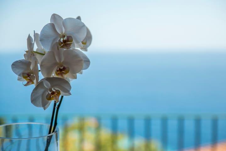 Villa al mare vista Portofino - Pieve Ligure - Villa