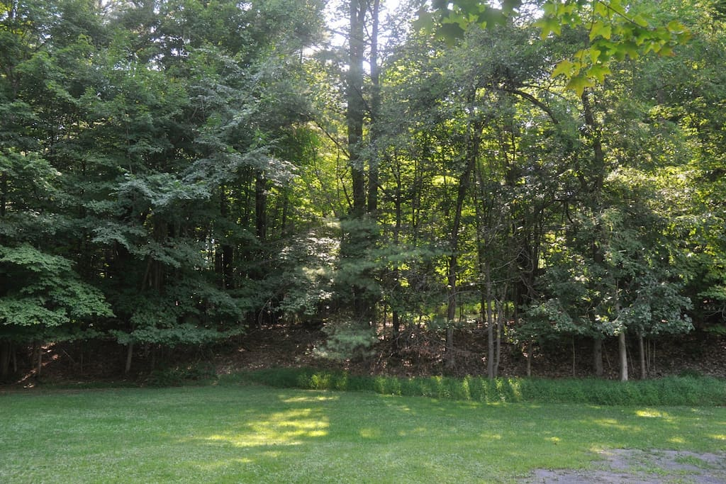 Some of the backyard