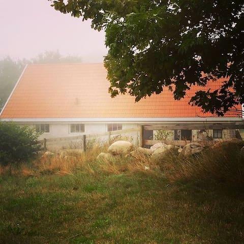 Modern stuga på Hästgård vid skog.