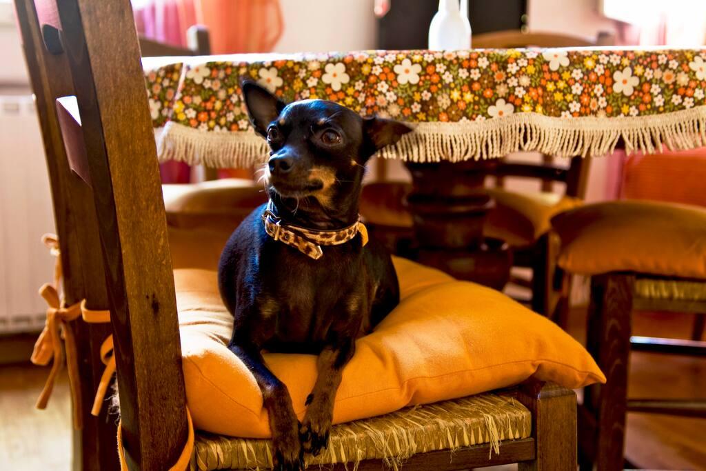 Trilly è contenta di accogliervi, ma non vive in questa casa