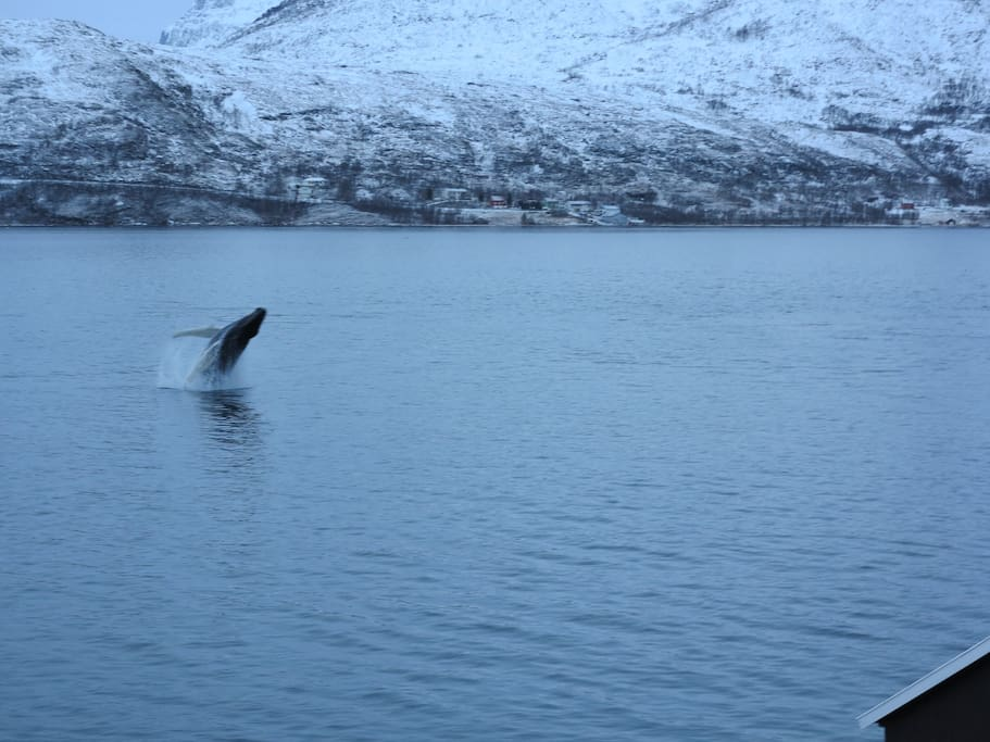 Whale 400 m from aparthment