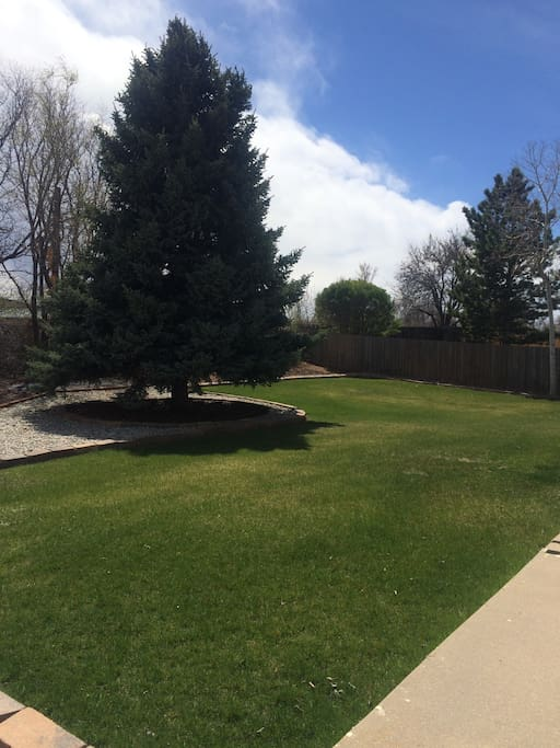 Huge backyard with nice lawn and beautiful Blue Spruce tree. There is a road behind the fence, which does allow for some car-noise.