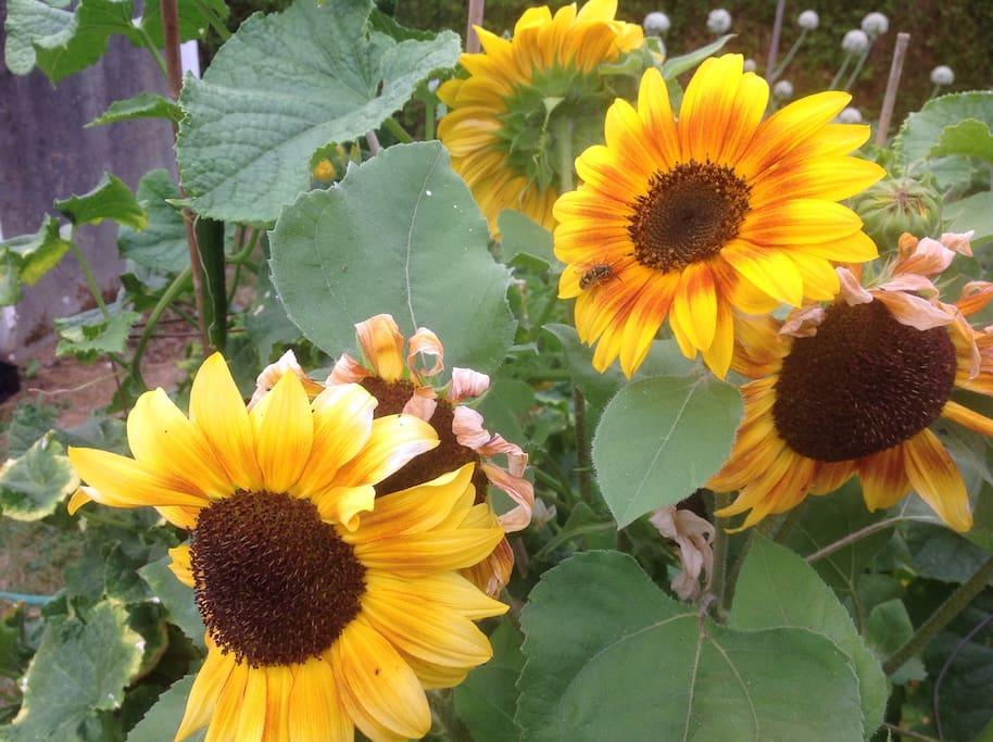 Flowers in the garden to enjoy