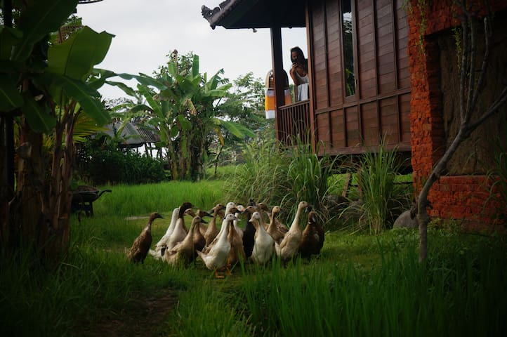 keramas surfcamp bali at rice field - Blahbatuh