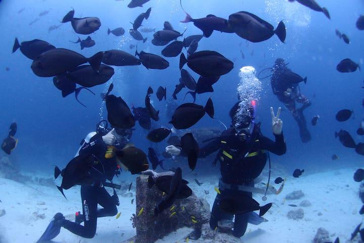 the best place for divers - Lapu-Lapu City - Villa